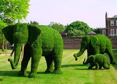 Topiary Sanatı