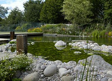 Biyolojik Gölet
